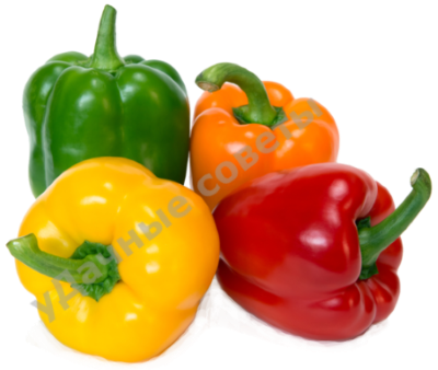 болгарский перец фото
