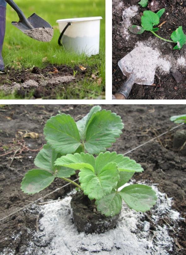 использование золы в качестве удобрения для огорода