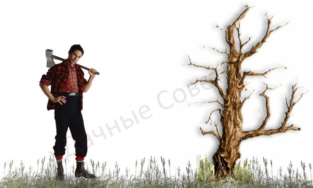 как срубить дерево на участке, инструкция