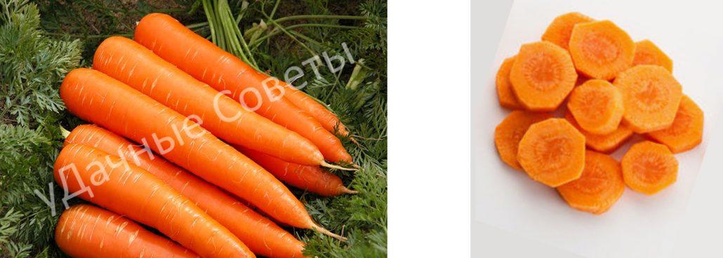 сладкая морковь королева осени, фото, описание