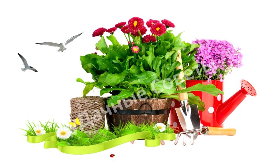 подготовка огорода после зимы, сад весной