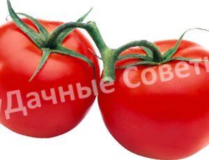 помидоры на веточке
