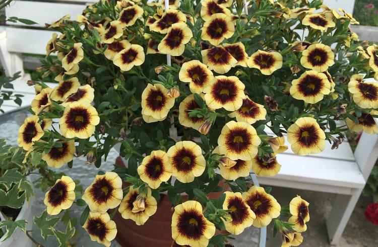 Размножение растения черенкованием