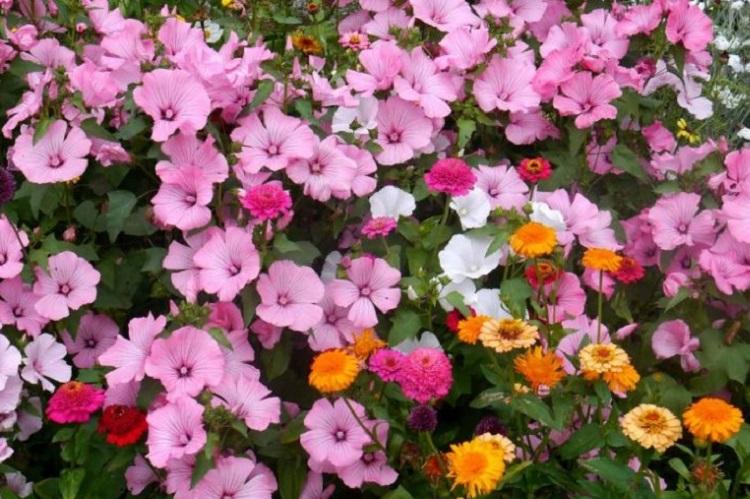 Как выбрать однолетние цветы