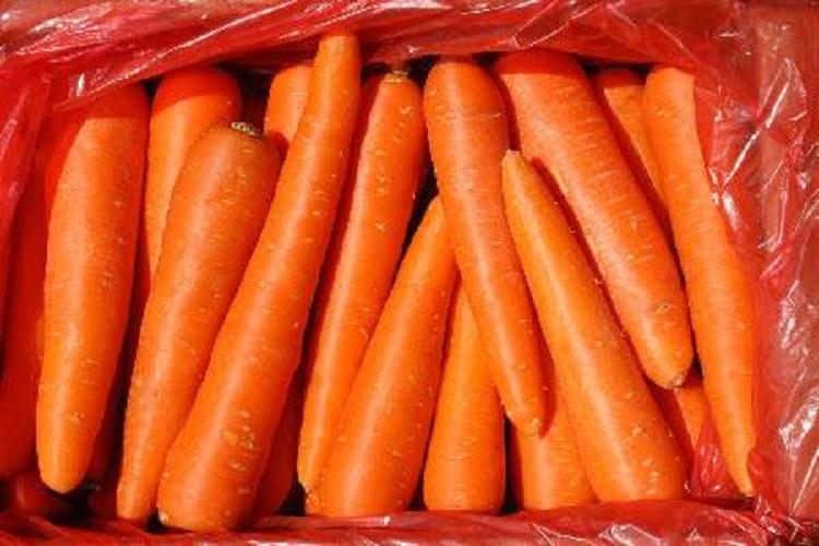 Описание моркови Королева осени