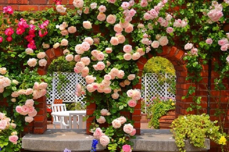 Когда вносить удобрения для роз