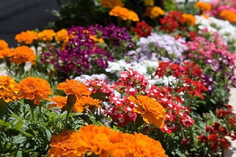 На что обращать внимание при выборе однолетних цветов