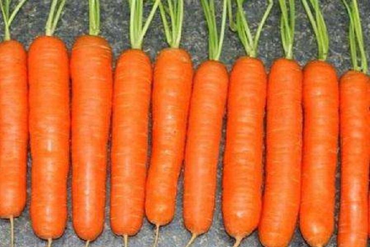 Морковь «Королева осени» хранение и уборка